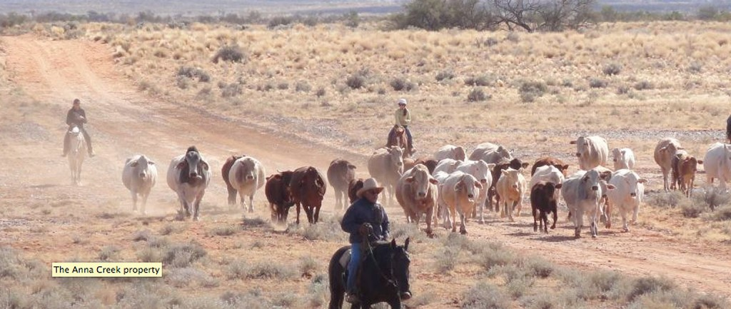 Gina Rinehart will buy Anna Creek cattle station. Picture: ABC