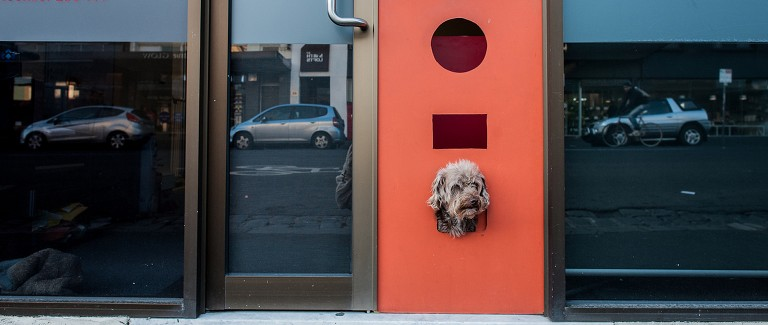 VIDEO: Terriers and trees the next big things in offices