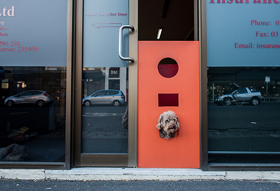 Companies are increasingly allowing pets in the workplace.