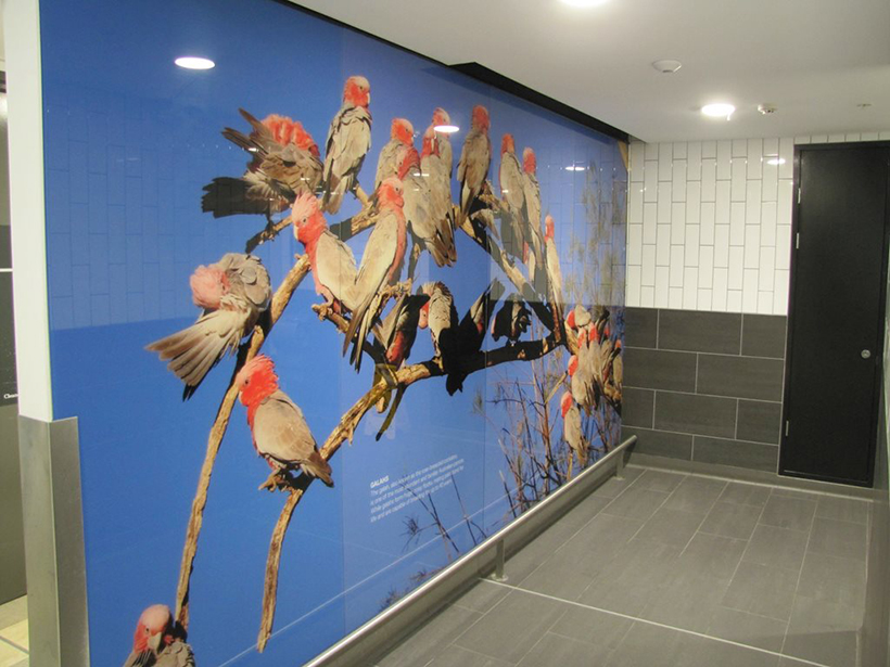 Toilet Brisbane Airport