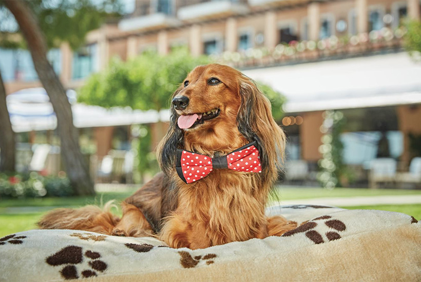 Pet packages hotel Belmond
