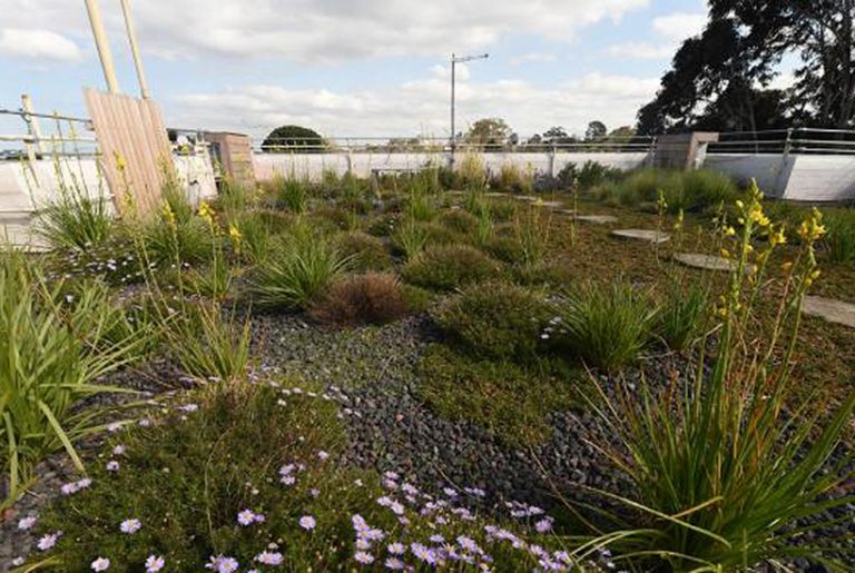 Calls for 'green roofs' on all commercial buildings