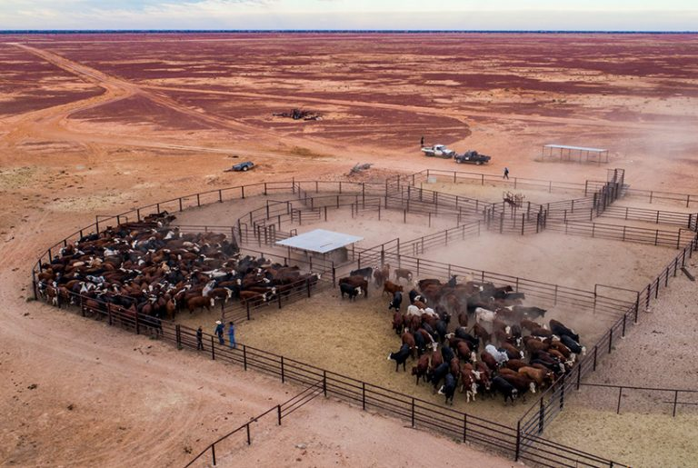 Australia's second largest cattle station for sale