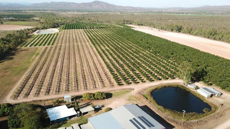 Queensland avocado and lime farm the perfect property salsa