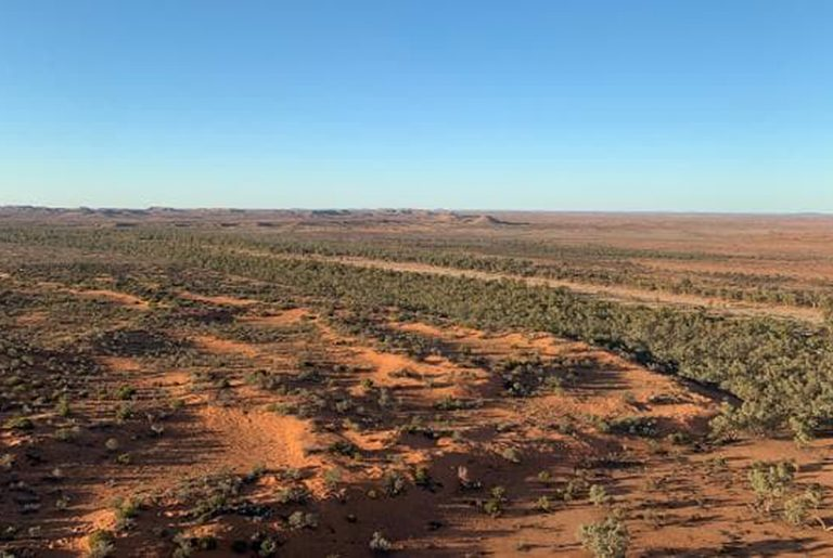 Royal sheikh to sell NT cattle station