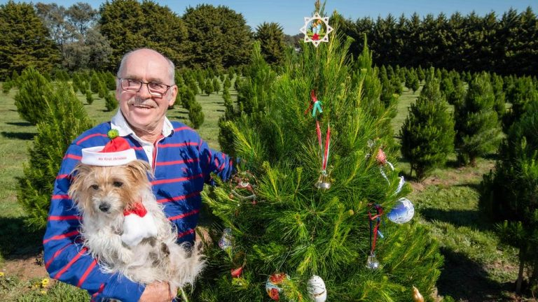 Santa comes early as Hanging Rock Christmas Tree Farm listed for sale