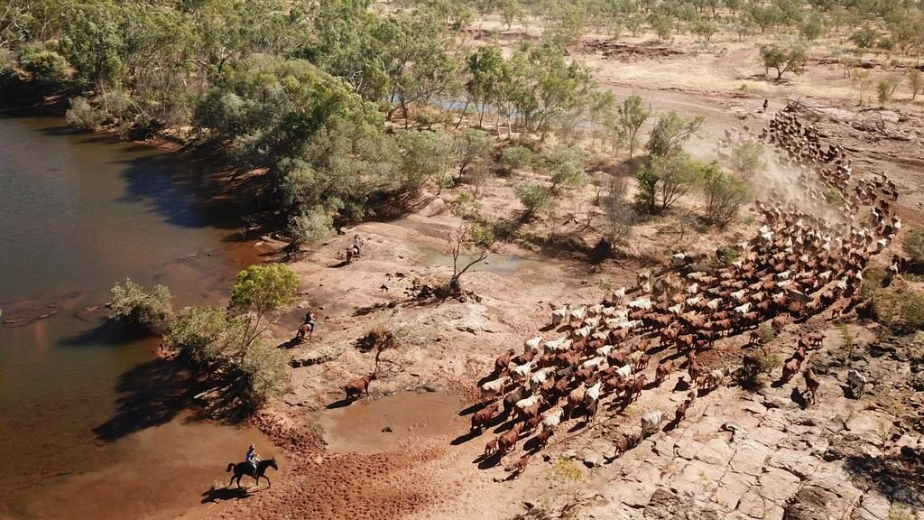 Nardoo cattle station sold for $35m under the hammer via Ray White Rural QLD.