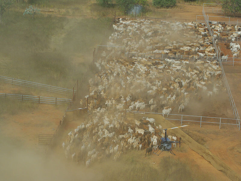 Australian farming families have bought several large cattle stations this year. Picture: Ray White