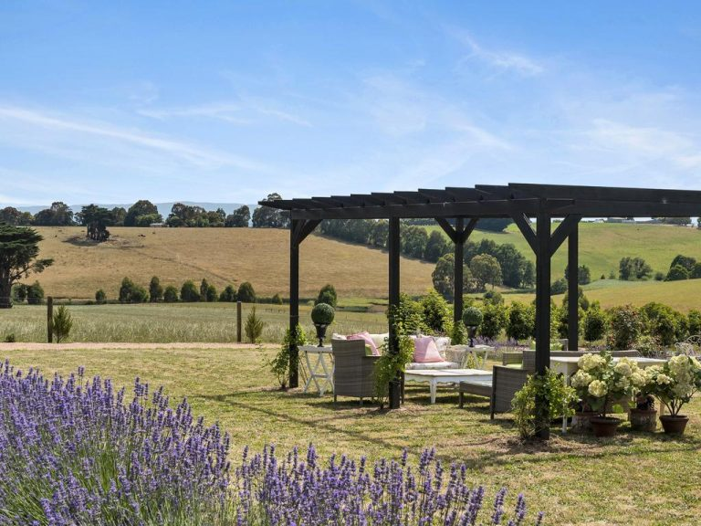 Provence in West Gippsland flower farm a slice of French countryside