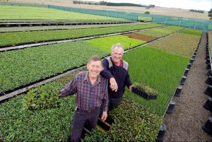 Farm offers buyers a chance to get into Manuka market