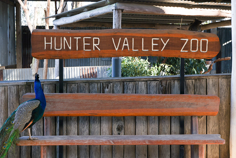 With more Australians set to take domestic holidays, Atlas Advisors Australia says the Hunter Valley Zoo is a great investment in a popular tourism asset. Picture: David Li Photography